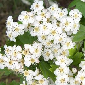 Endlich Frühling! – 1.Mai am Kapellenberg