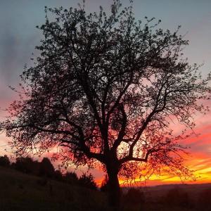 Herbstvollmondabend am Kapellenberg