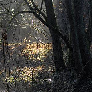 Samhain – Allerheiligen