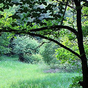 Waldmedizin – Die Heilkräfte des Waldes