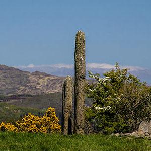 Irisches Tagebuch – Teil 4 – Kealkill Steinkreis und der Eibenwald im Killarney National Park