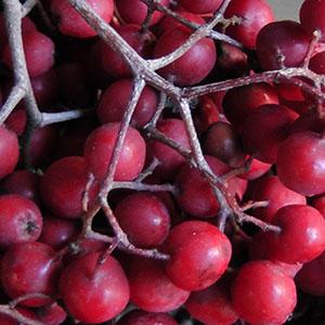 Herbstliche Wildfrüchte – Eberesche